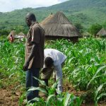 Malawi: Farmers Body Endorses Govt Fixed Commodity Prices