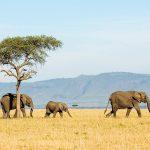 Tanzania: Nearly 30 Percent of Tanzania Is National Parks